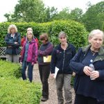 Tour & discussion of topiary in the garden
