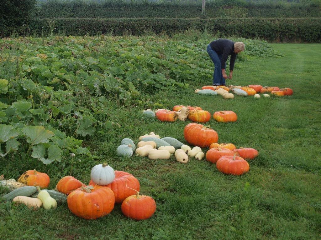 Squash & Pumpkins Daylesford