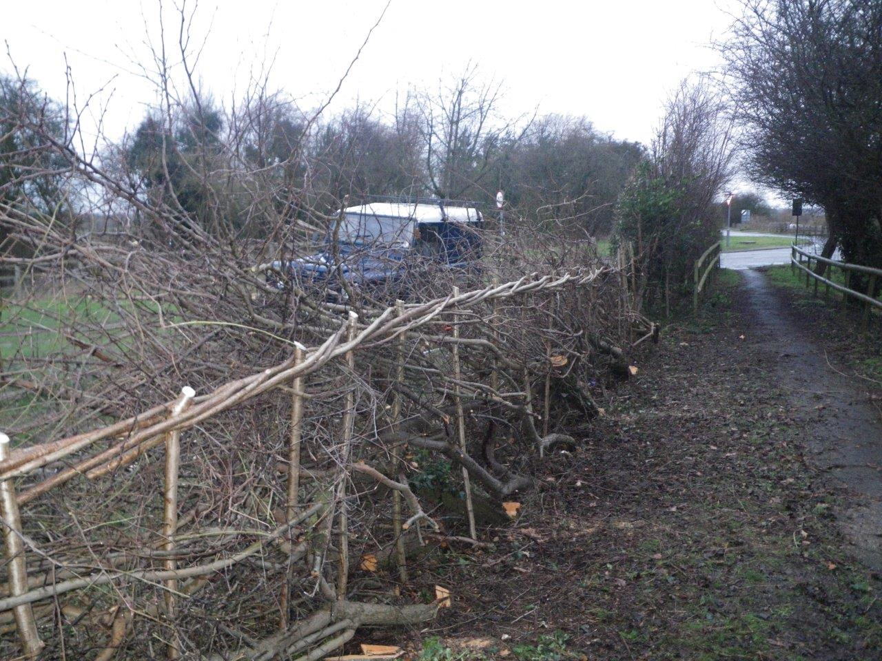 Finished section of hedge