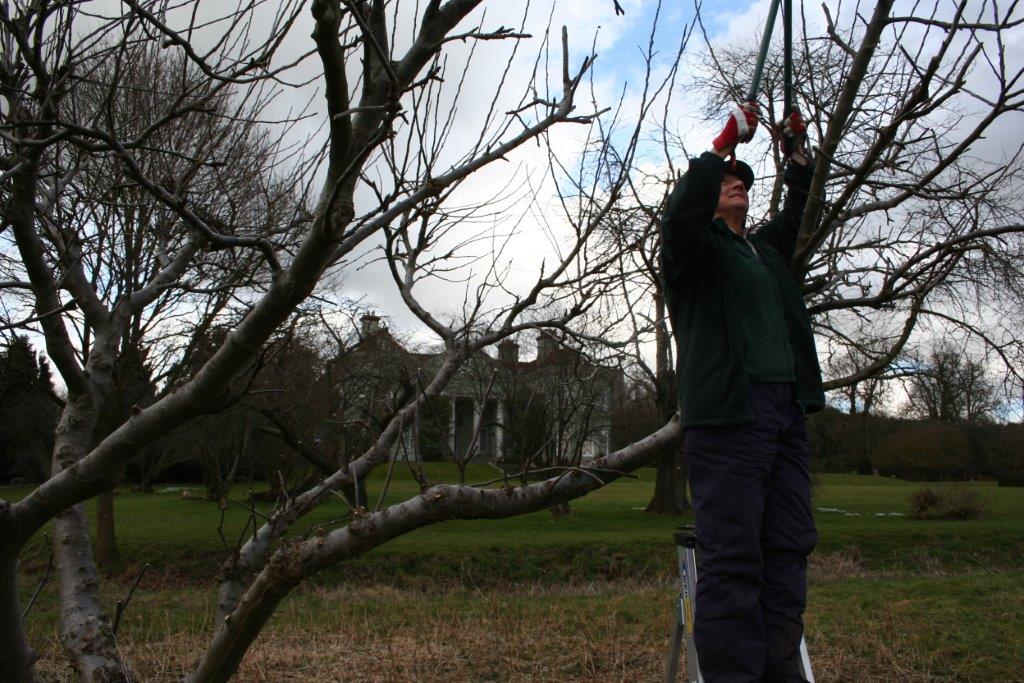 Essex - Winter Fruit Tree Pruning - Skills Day
