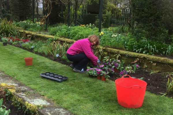 Planting at Chenies