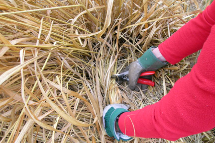 Kent - Ornamental Grasses - Skills Day