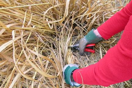 Kent - Ornamental Grasses Maintenance Day