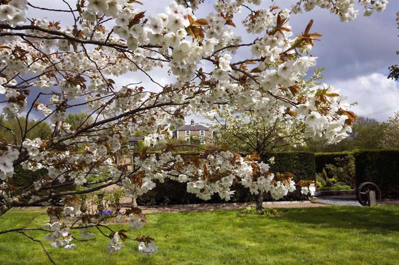 Newcastle upon Tyne - The Making of an Environmentally Friendly Garden