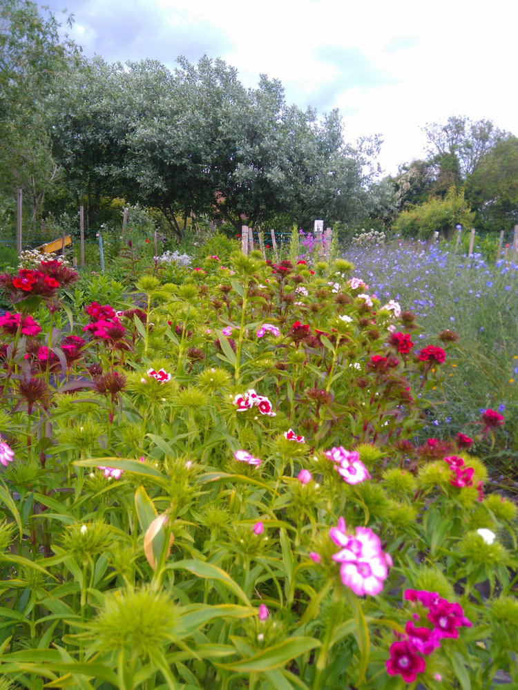 Somerset - Planning A Cutting Garden Workshop - Postponed subject to government advice - Please check back for regular updates