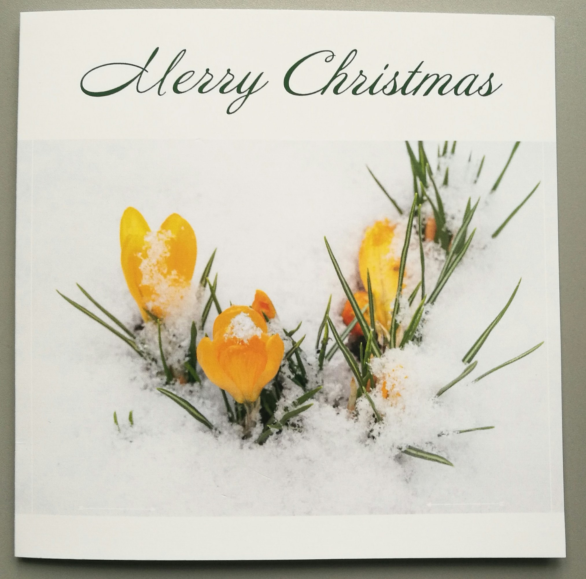 WFGA Christmas Cards (Crocus)
