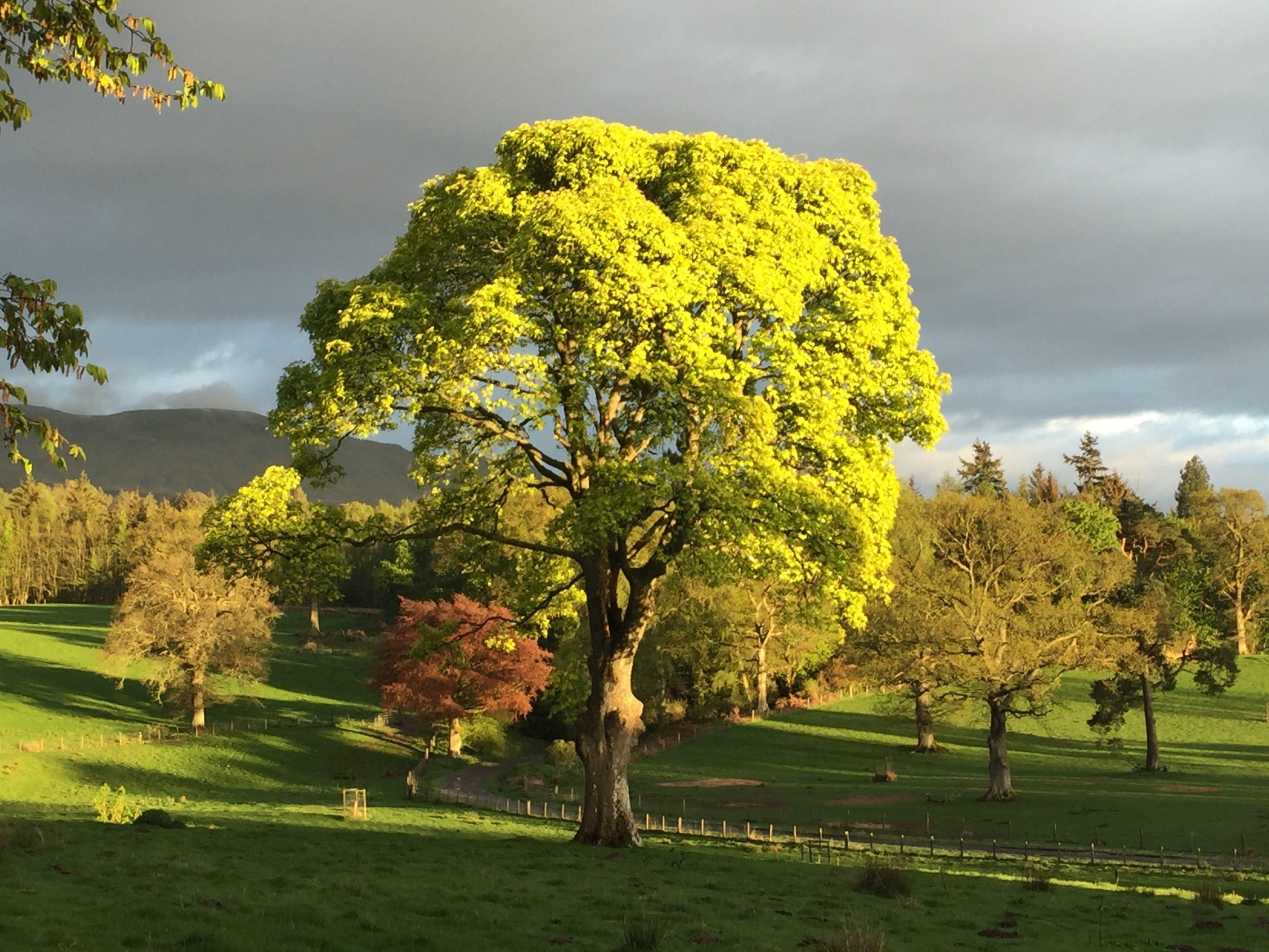 Scotland - Tree Identification Day