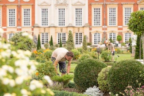 London, Hampton Court  -  The Art of Topiary