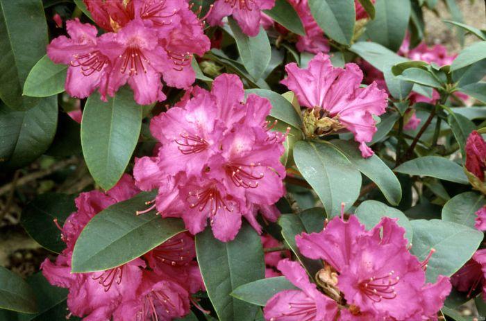 Scotland, Rhu – Rhododendron Propagation Workshop